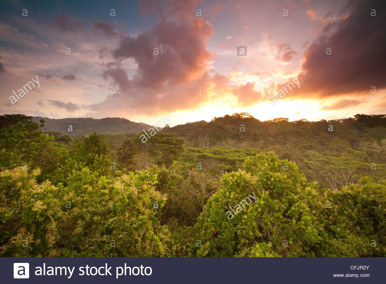 Beau lever de soleil dans la forêt tropicale du parc national de Soberania, République du Panama. Banque D'Images