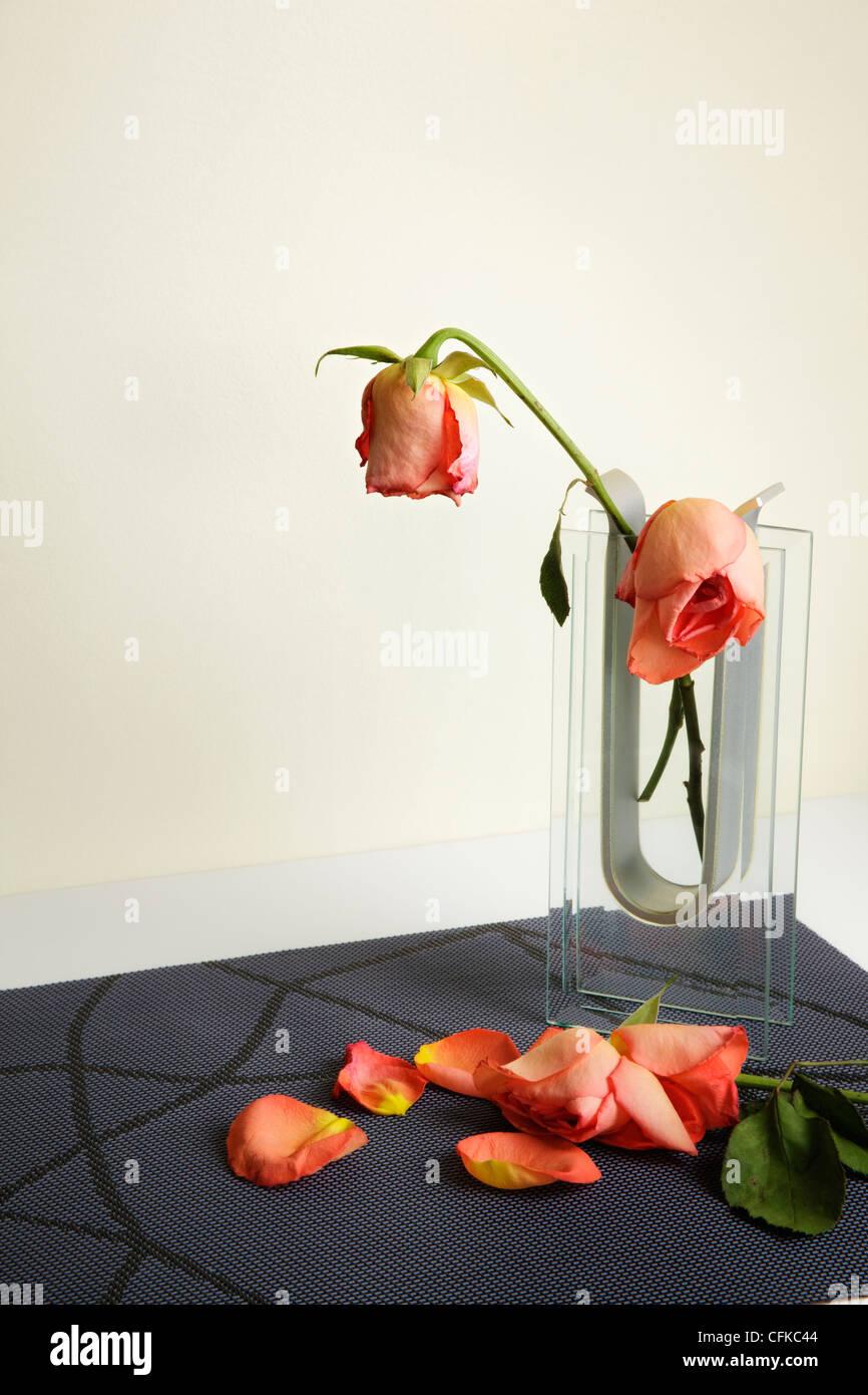 Le flétrissement de roses rouges présentées dans un vase de verre Banque D'Images