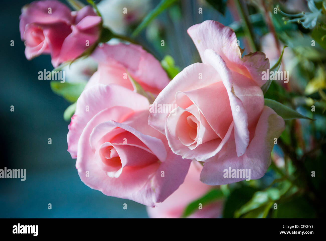 Détail de bouquet de roses rose tendre Photo Stock