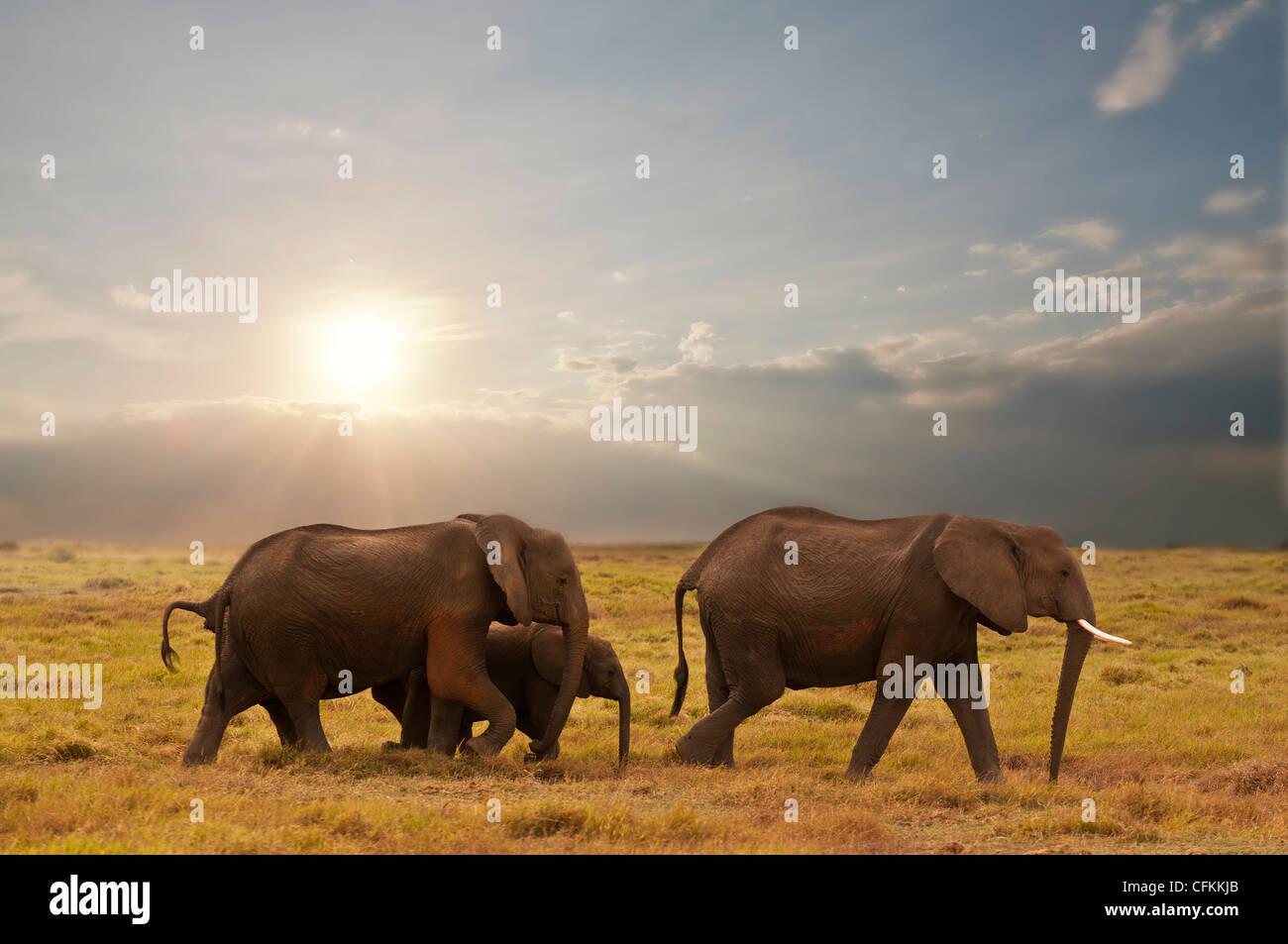 Famille d'éléphants dans le parc national Amboseli, Kenya Banque D'Images