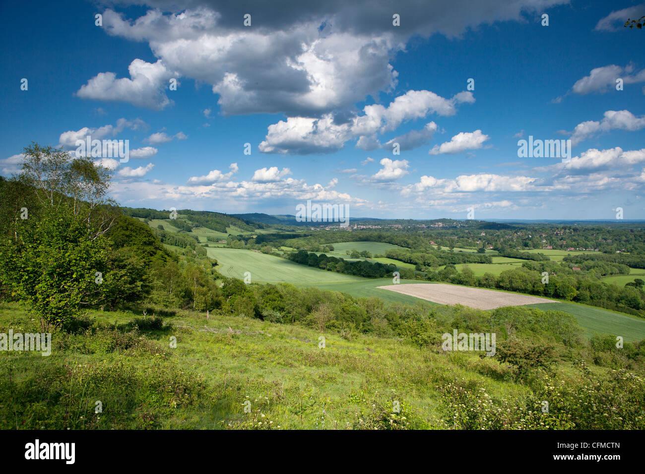 Vue d'été est le long les collines du Surrey, Surrey, Angleterre, Royaume-Uni, Europe Banque D'Images