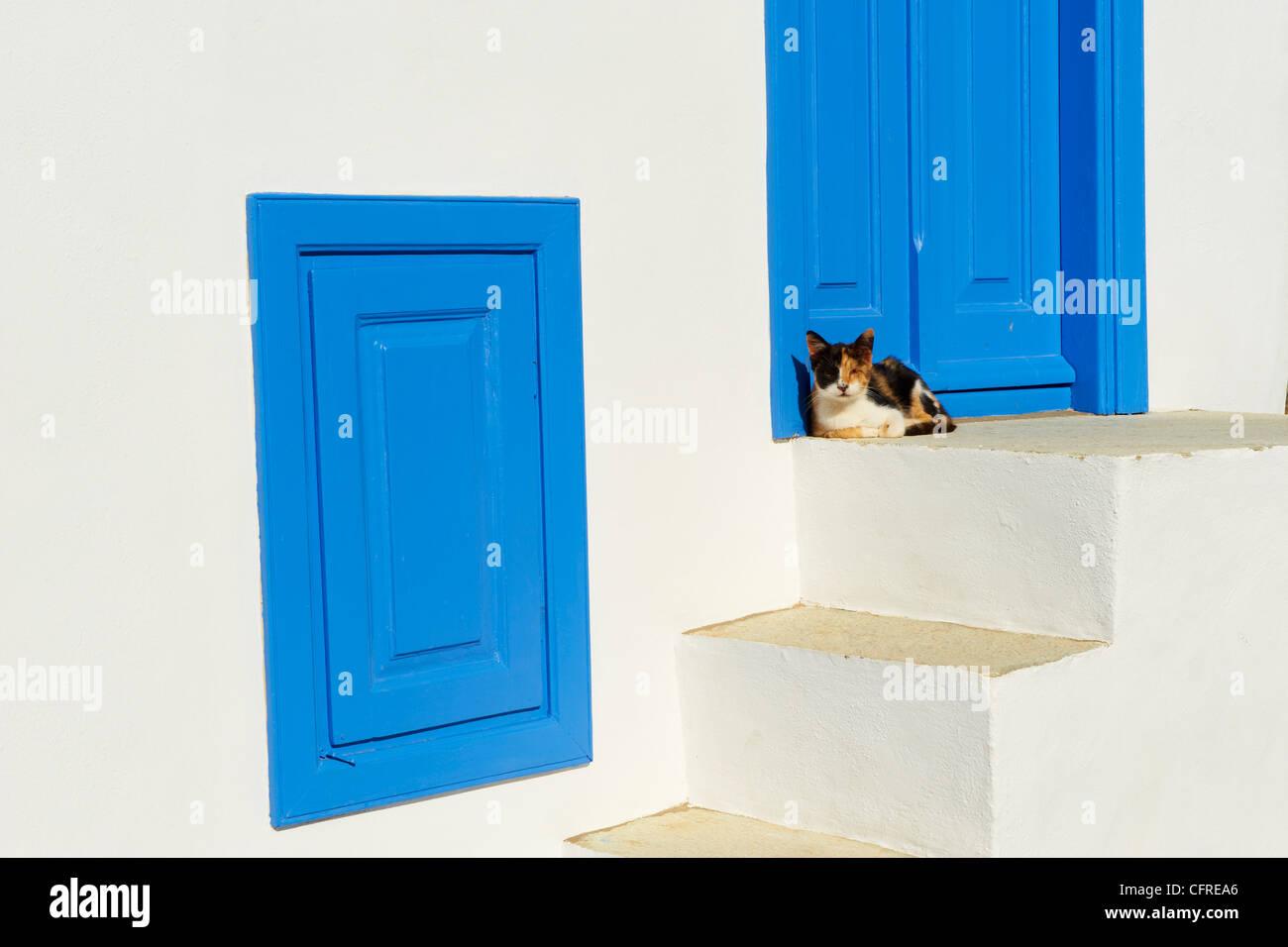 Chat dans le vieux village de Kastro, Sifnos, Cyclades, îles grecques, Grèce, Europe Photo Stock