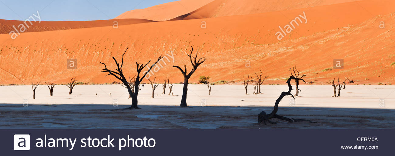 Dead Vlei, Namib-Naukluft Park, Namibie Photo Stock