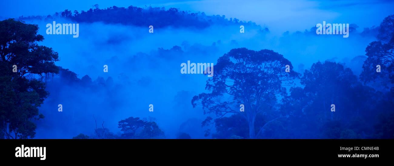 Plaine de diptérocarpacées de forêt pluviale la nuit, prises par la lune. Maliau Basin - Sabah's Photo Stock