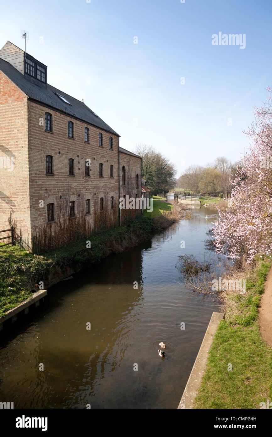 La rivière Lark et Old Mill à Mildenhall Suffolk , East Anglia UK Photo Stock