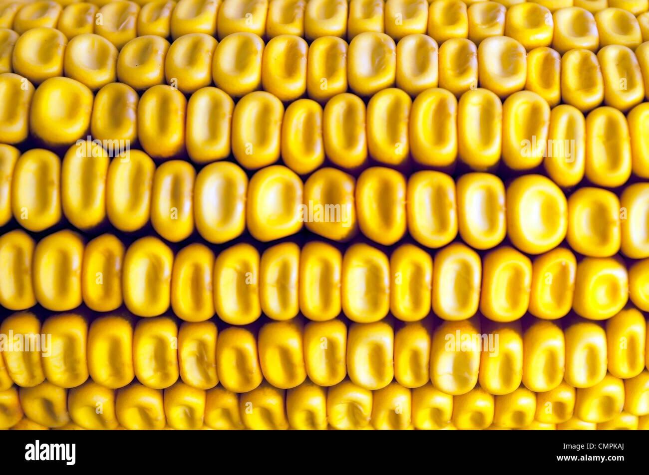 Un plan macro texture maïs Photo Stock