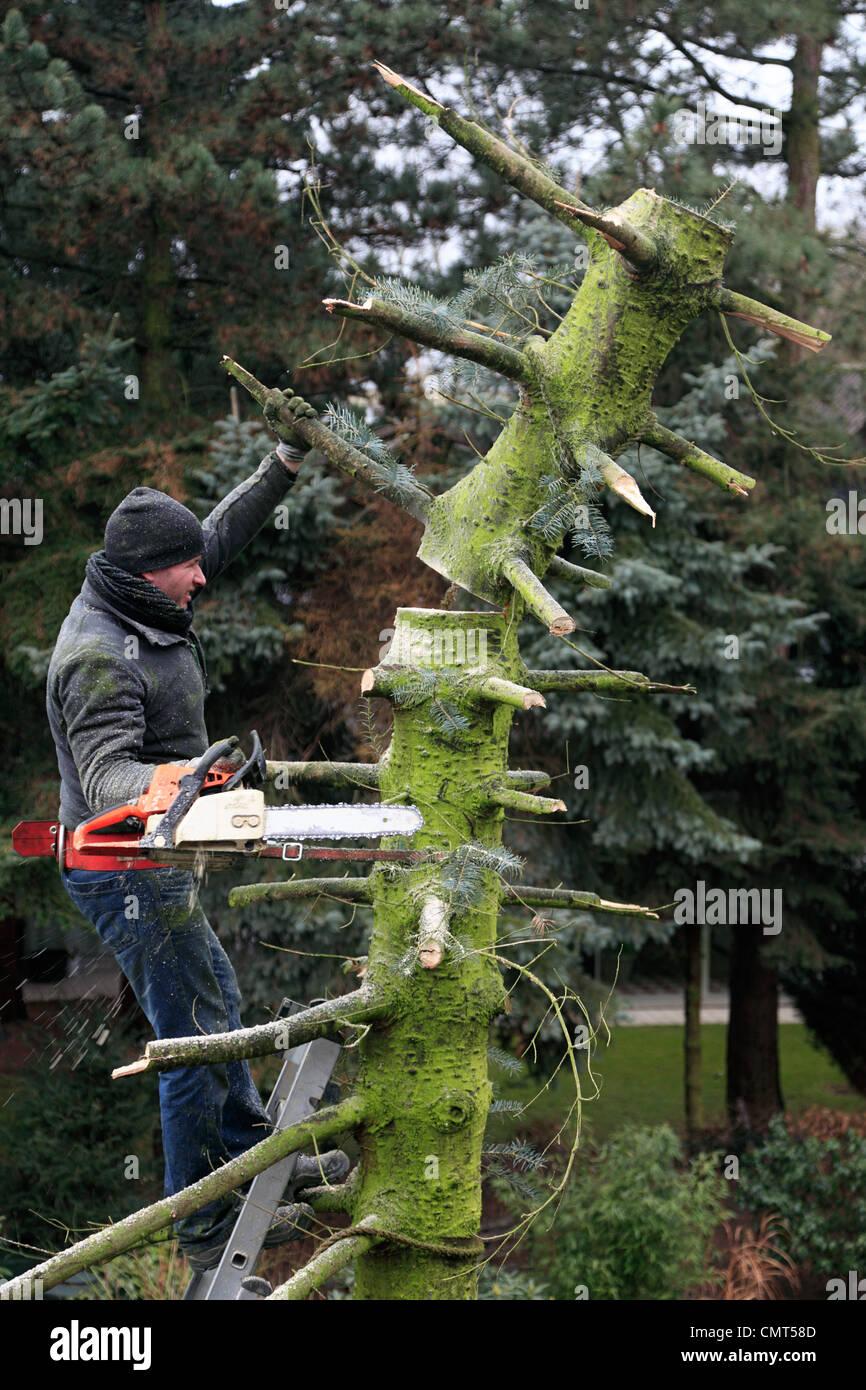 abattage arbre bas rhin