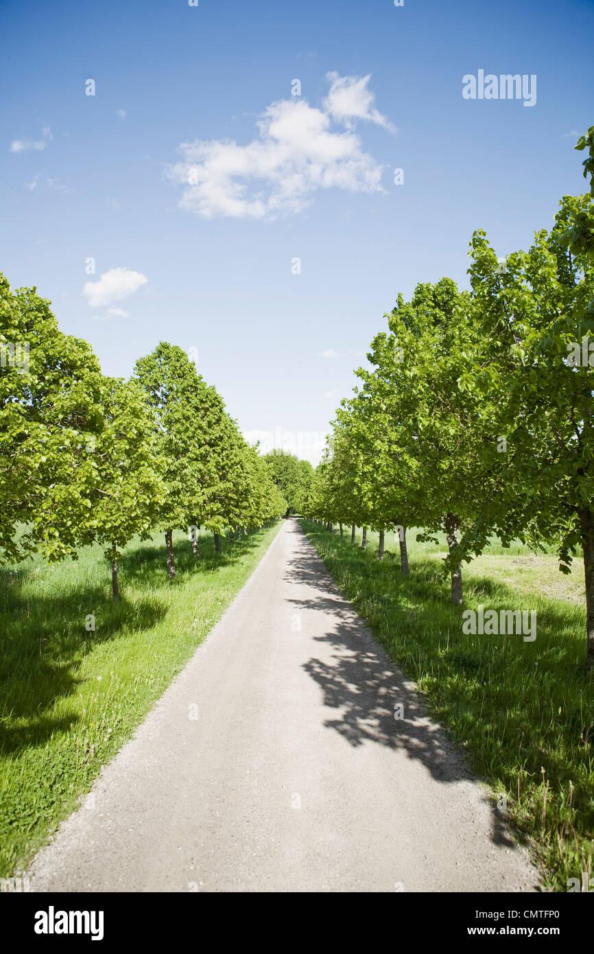 Voie droite entre les arbres Photo Stock