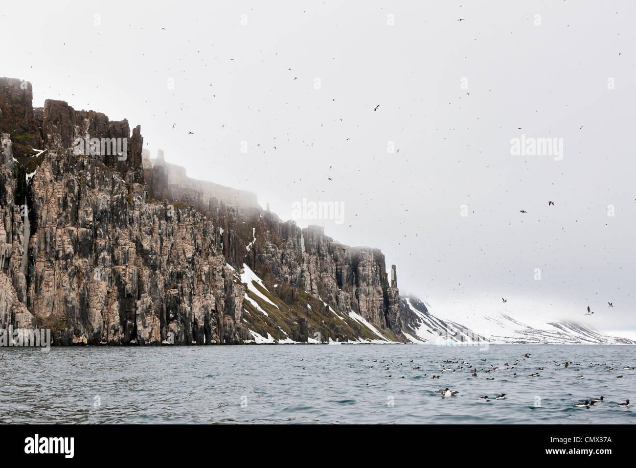 L'Europe, Norvège, Spitzberg, Svalbard, Groupe de mergule flying Banque D'Images