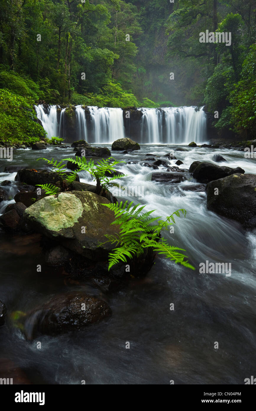 Nandroya Falls dans le Parc National de Wooroonooran. Atherton Tablelands, Innisfail, Queensland, Australie Photo Stock