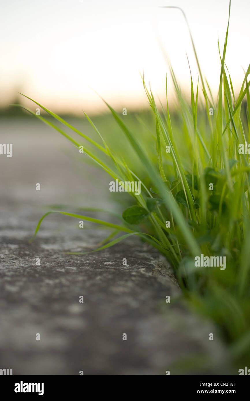 Brins d'herbe et de béton, Close up Banque D'Images