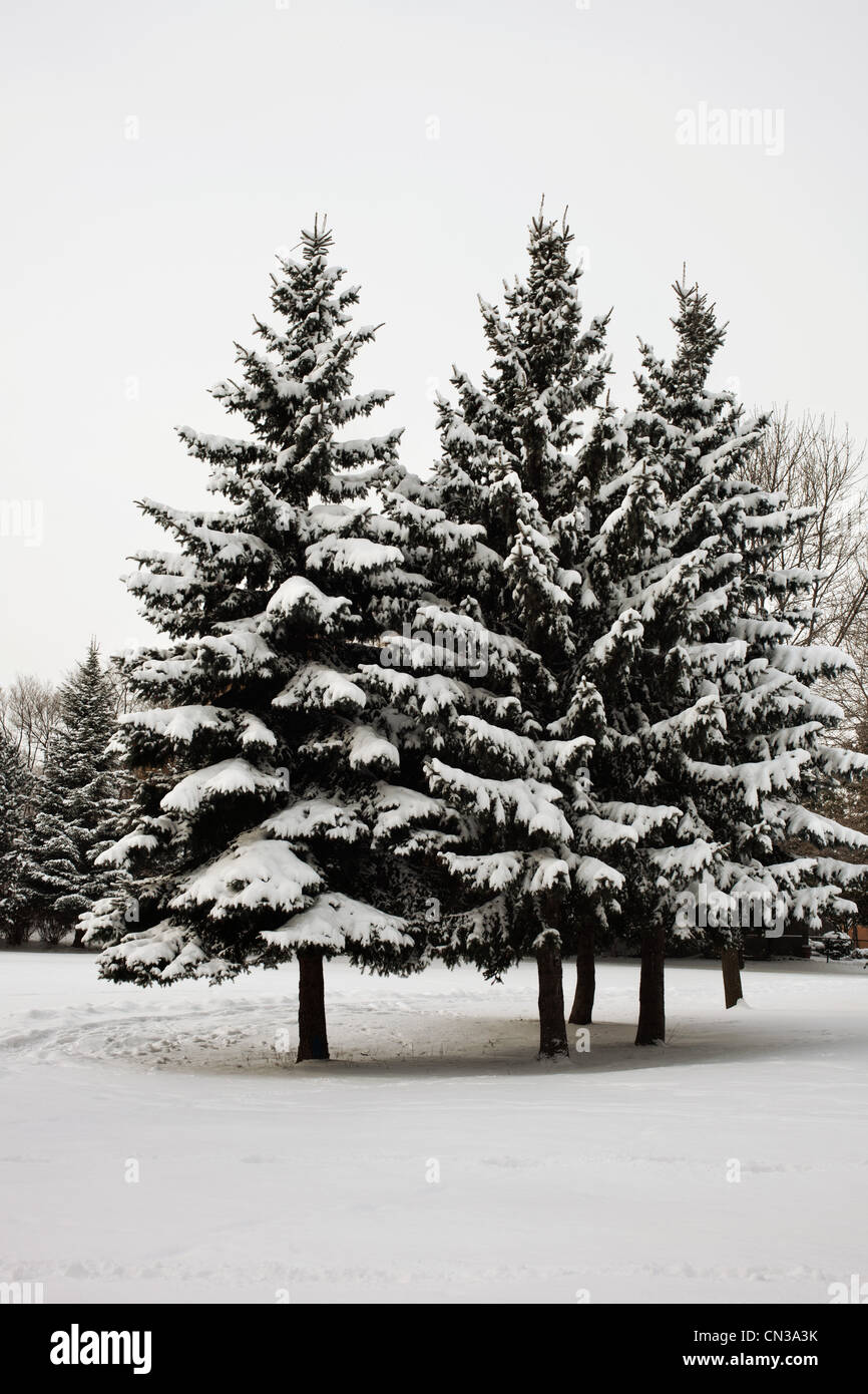 Arbres couverts de neige Photo Stock