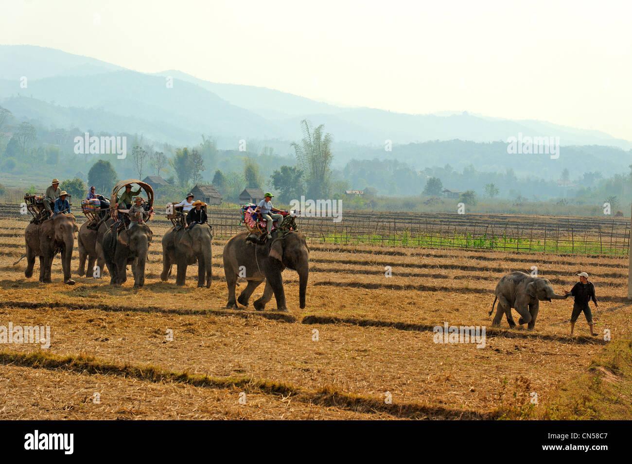 Laos, Sainyabuli Province, Hongsa, sur le dos d'éléphants trek dans les rizières Photo Stock
