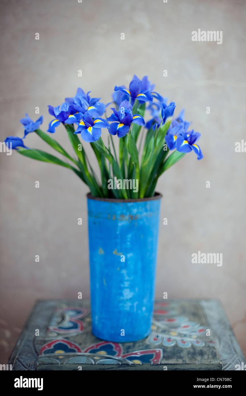 Iris fleurs dans un pot peint bleu métal rouillé. Photo Stock
