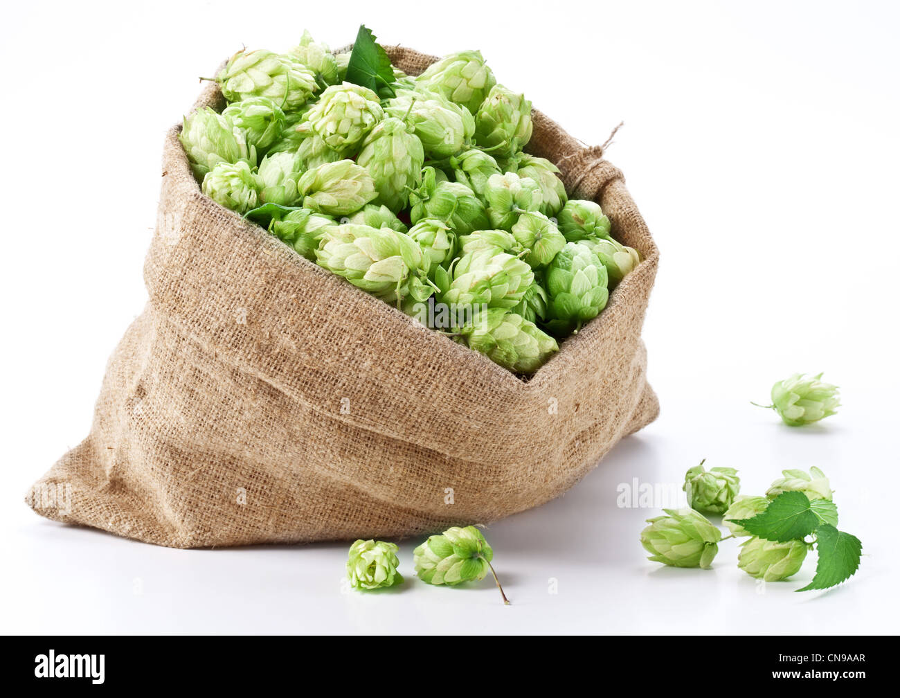 Sac de houblon sur un fond blanc. Photo Stock