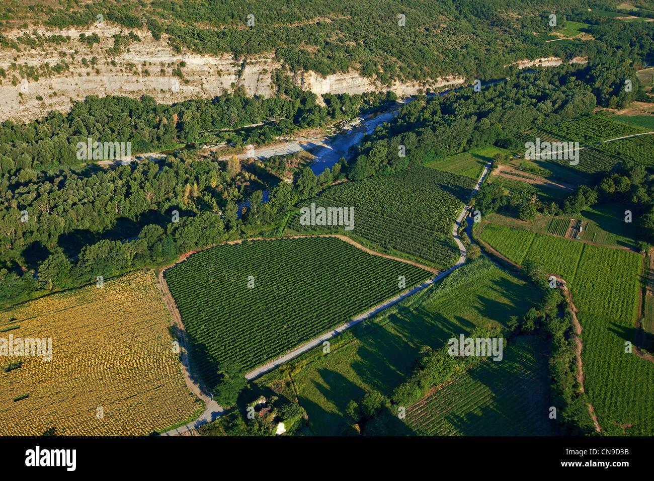 La France, l'Ardèche, Vogue, vignes sur les rives de la rivière Ardèche (vue aérienne) Photo Stock