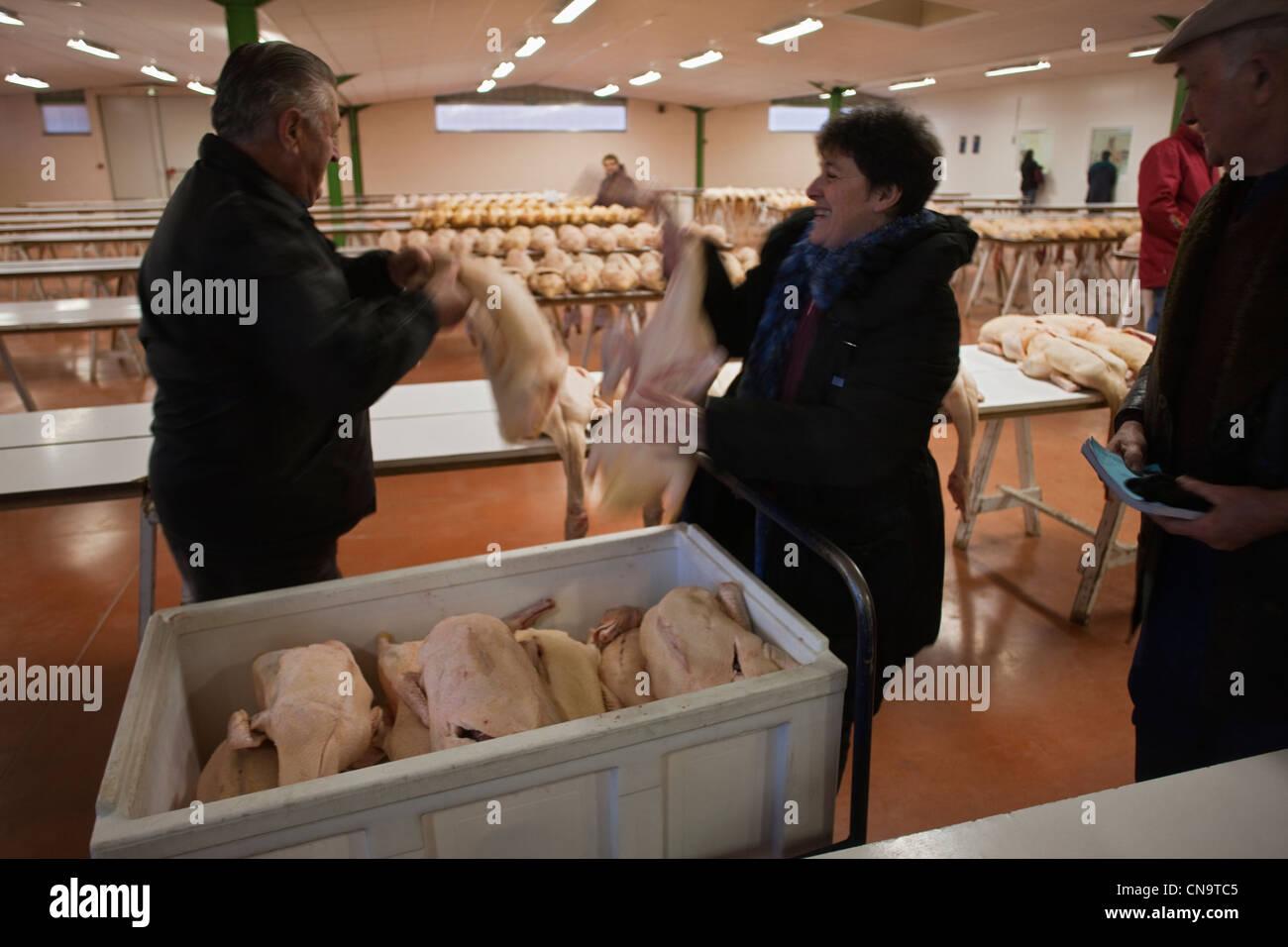 France, Gers, Samatan, le marché en gras, les obtenteurs déballer leur marchandise Photo Stock