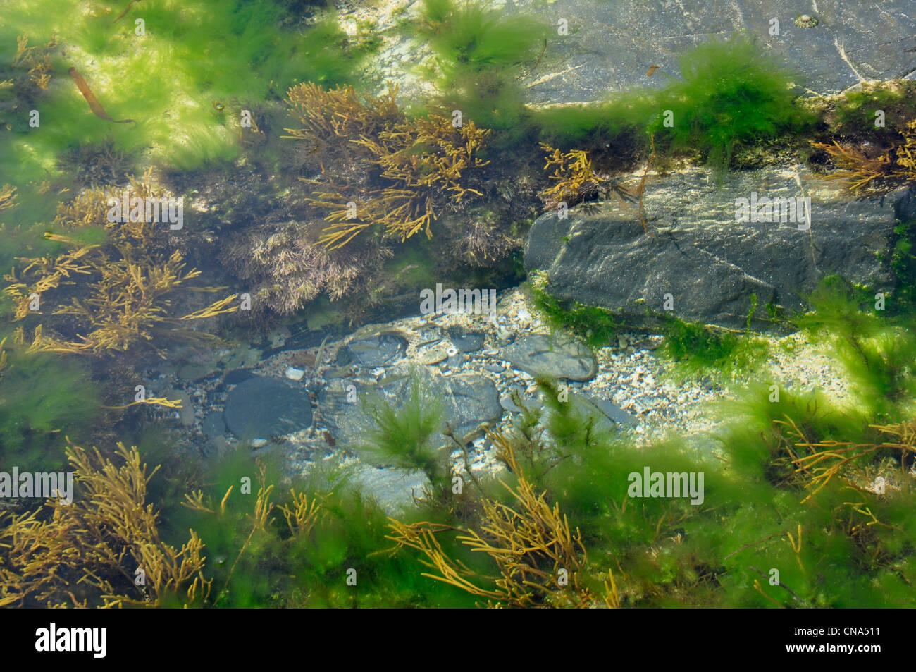 Station rock pool - algues - Vert - Marron - shingle et rock - petit poisson pris par le vent Photo Stock