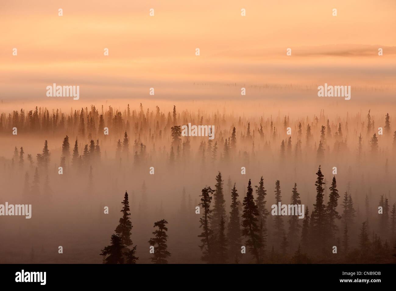 Lever du soleil sur une forêt brumeuse, Katmai National Park et préserver, sud-ouest de l'Alaska, Photo Stock