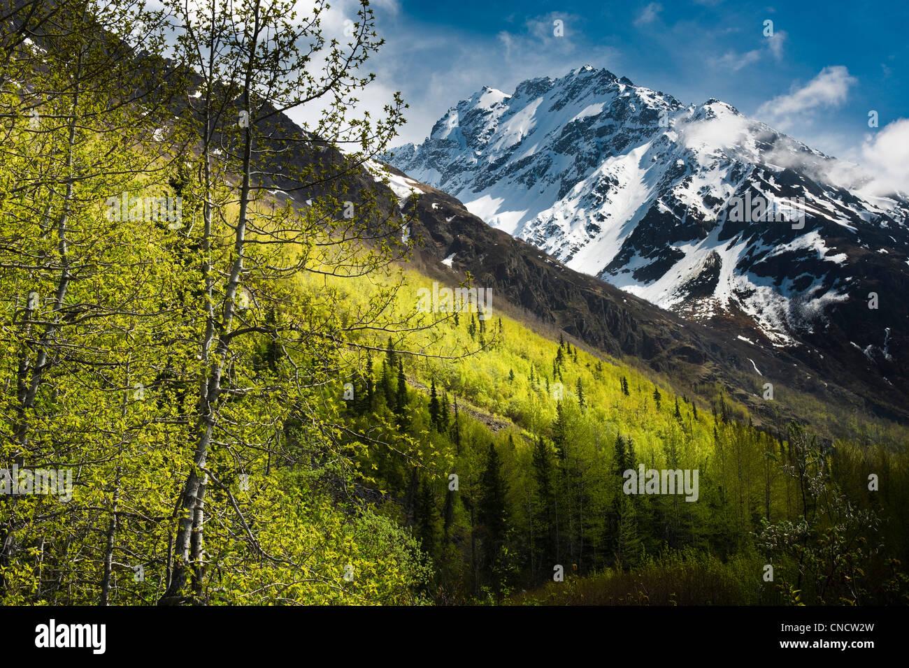 Vue panoramique de feuillage de printemps vert vif avec Pic Scirpe en arrière-plan, parc d'état de Photo Stock