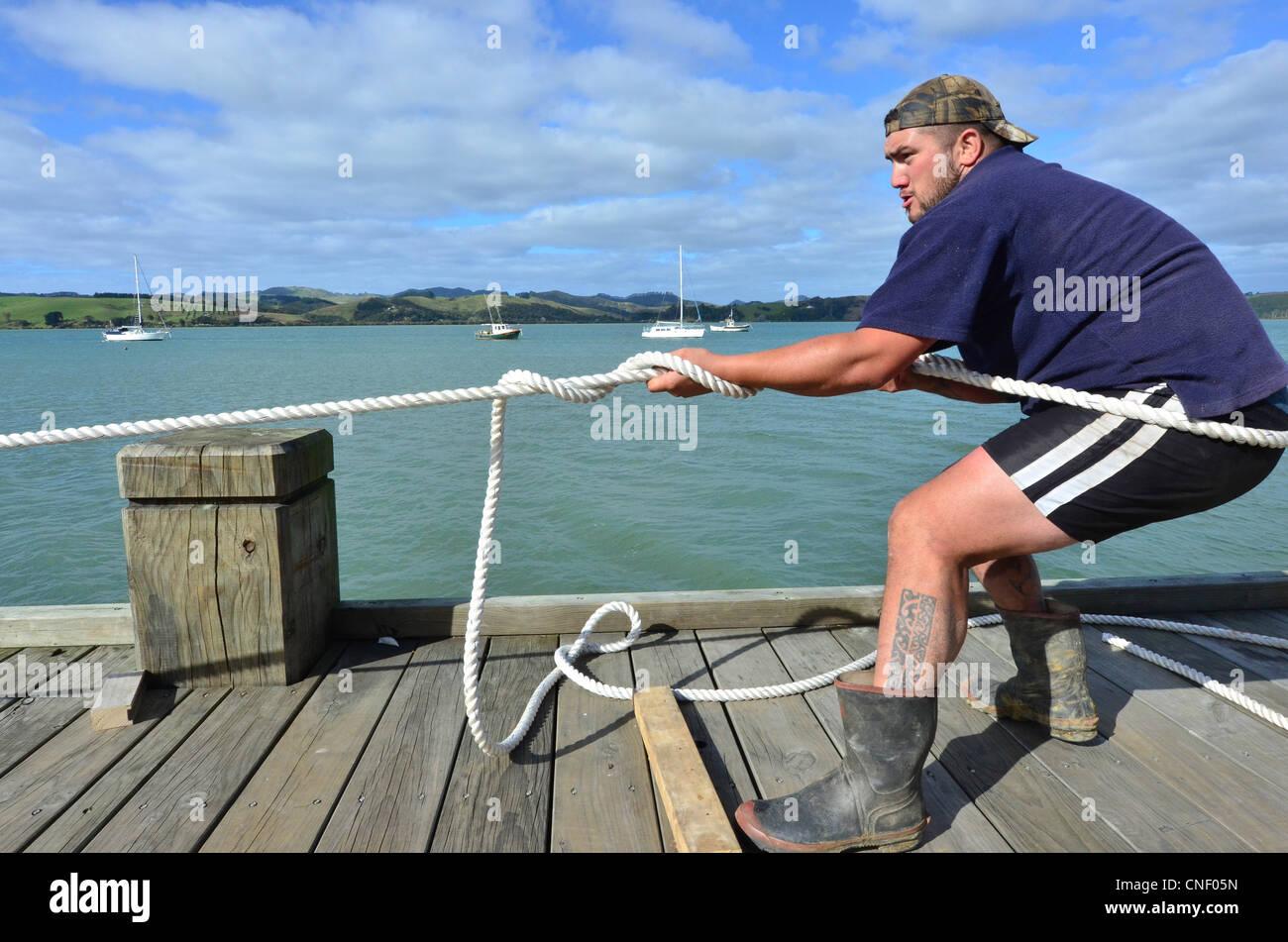 NORTHLAND , Nouvelle-zélande 14 AVRIL 2012: un grand homme est Mori tirant une corde lors d'une corde Photo Stock