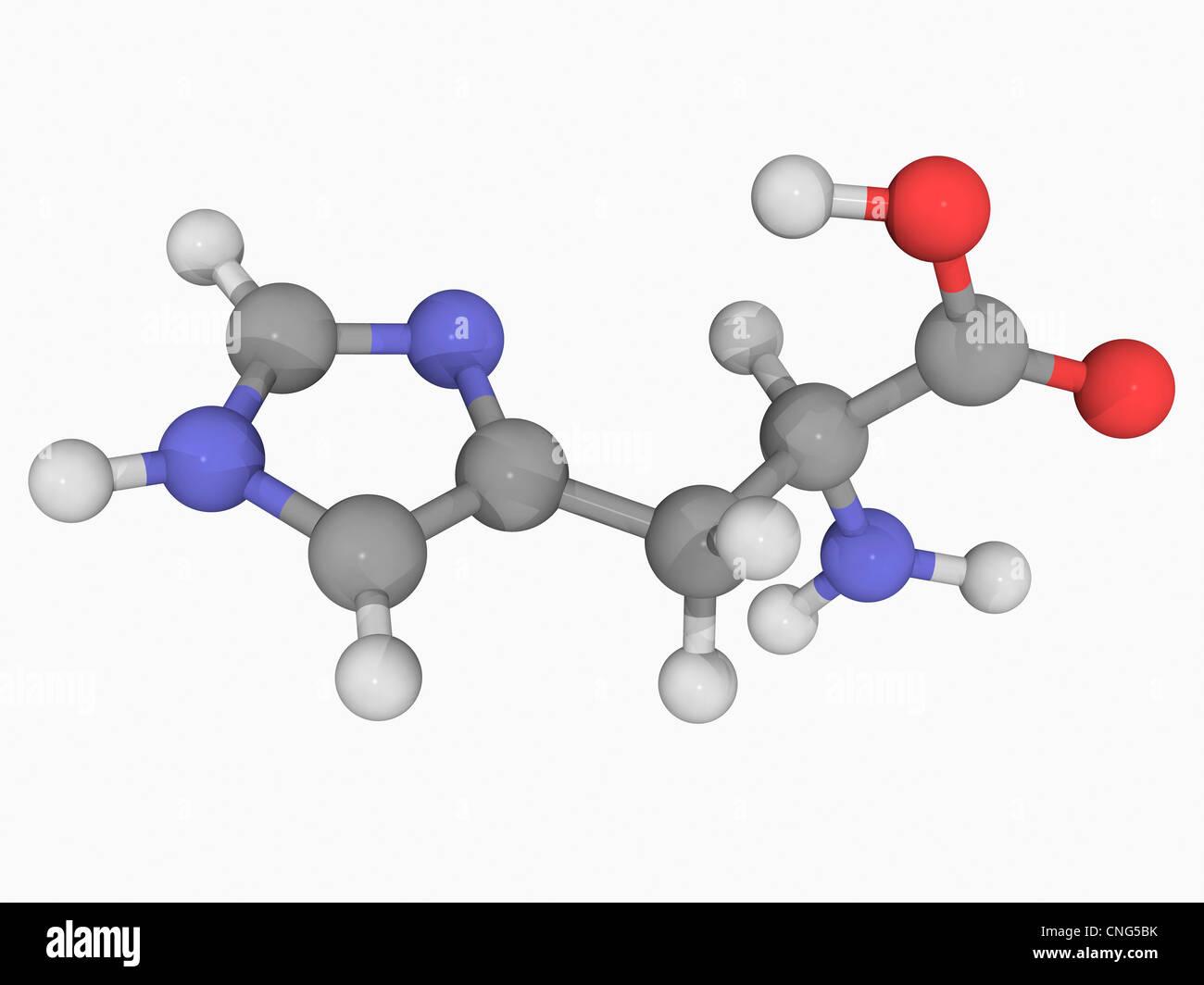 Molécule d'histidine Photo Stock