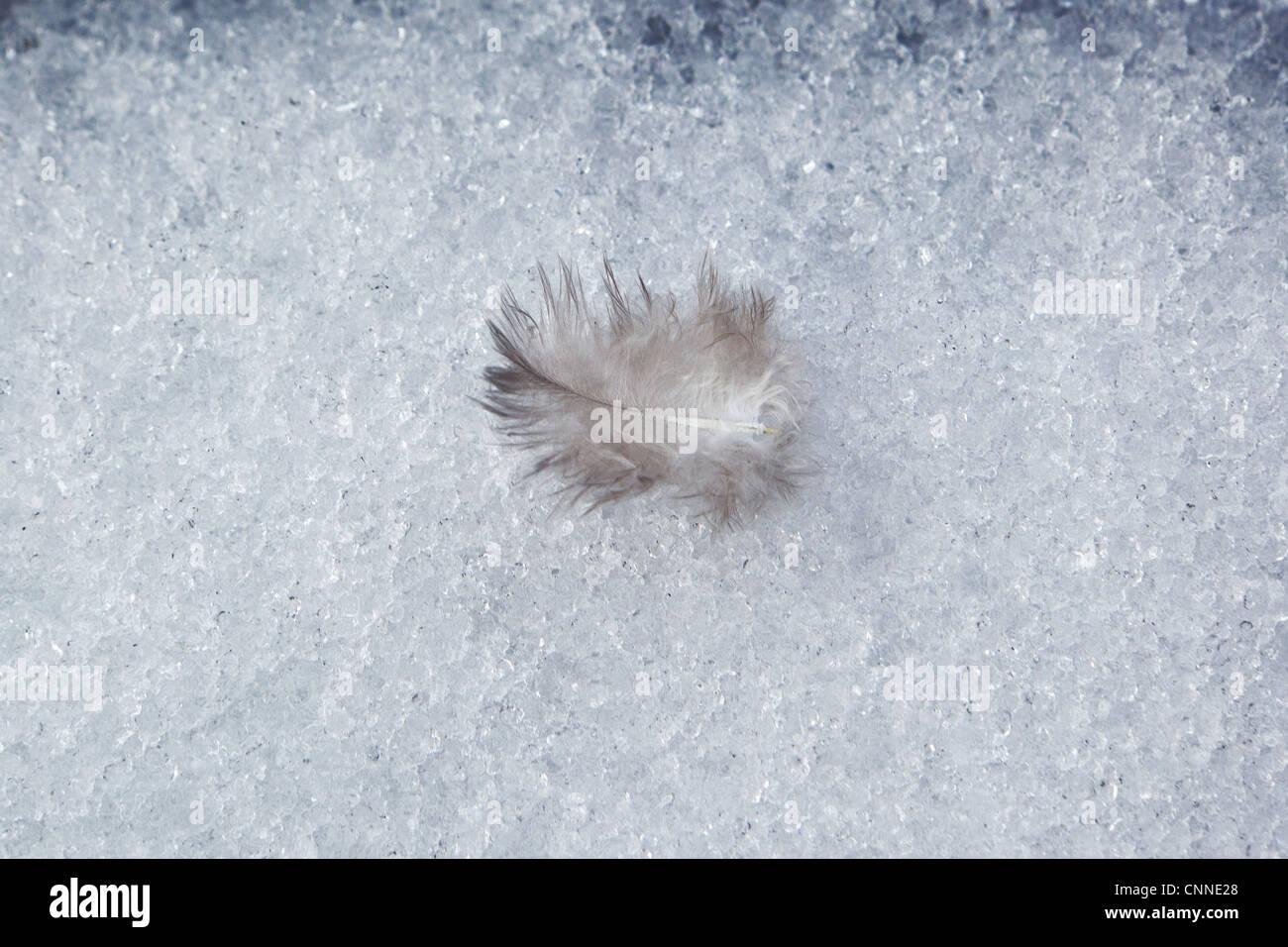 Plume d'oiseau dans la neige Photo Stock