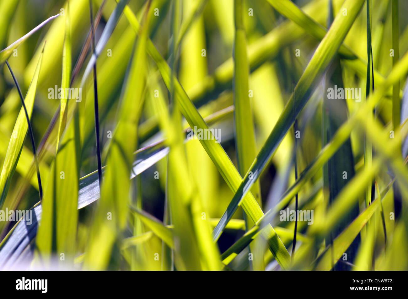 Les lames d'herbe baigné de lumière Photo Stock