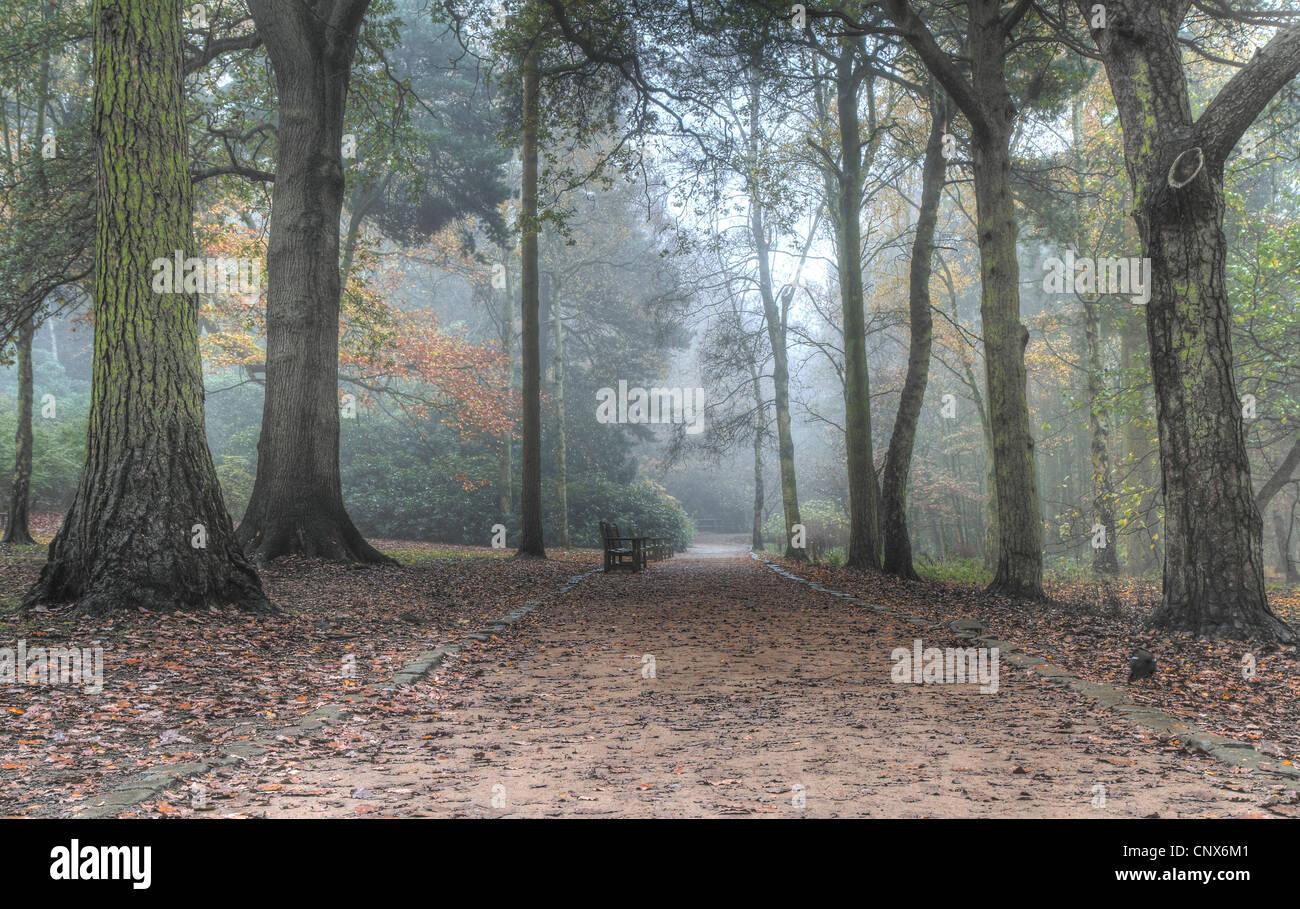 Chemin à travers Golden Acre Park Leeds UK autumn mist Photo Stock