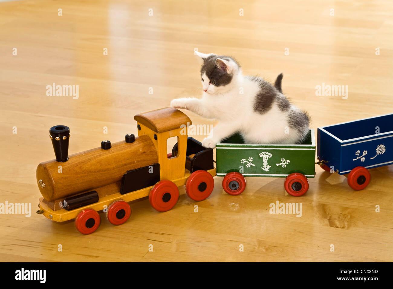 chat domestique le chat domestique felis silvestris catus f jeune chat jouant avec train en. Black Bedroom Furniture Sets. Home Design Ideas