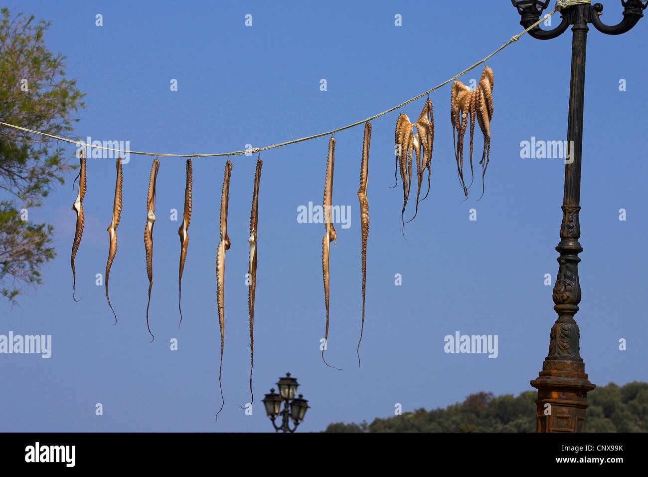Calamars sur une ligne de séchage, la Grèce, Lesbos Banque D'Images