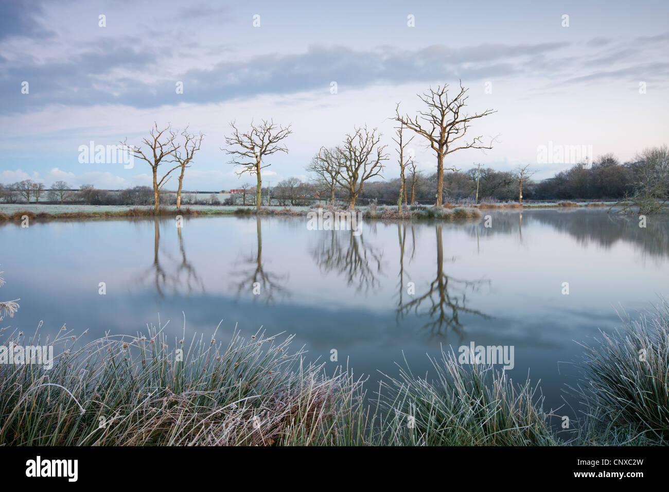 Des scènes d'hiver glacial à côté d'un lac, toujours Morchard Road, Devon, Angleterre. Photo Stock
