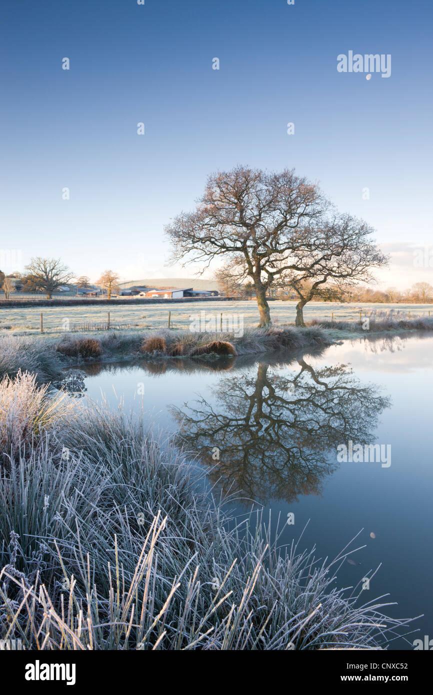 L'herbe givrée et arbres au bord d'un étang encore sur un matin, route Morchard Winters, Devon, Photo Stock
