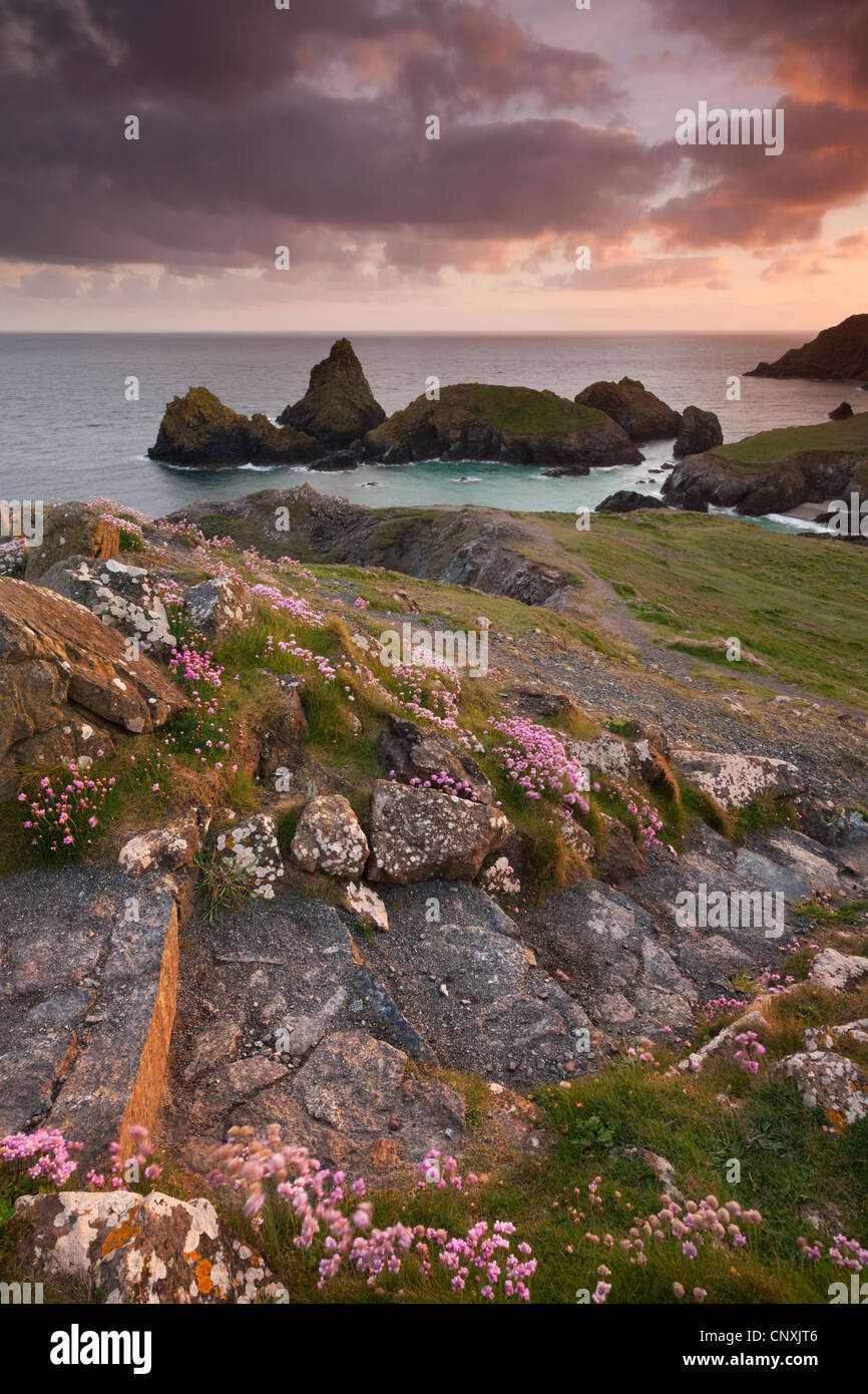 South West Coast Path menant à Kynance Cove sur la péninsule de Lizard, Cornwall, Angleterre. Printemps Photo Stock