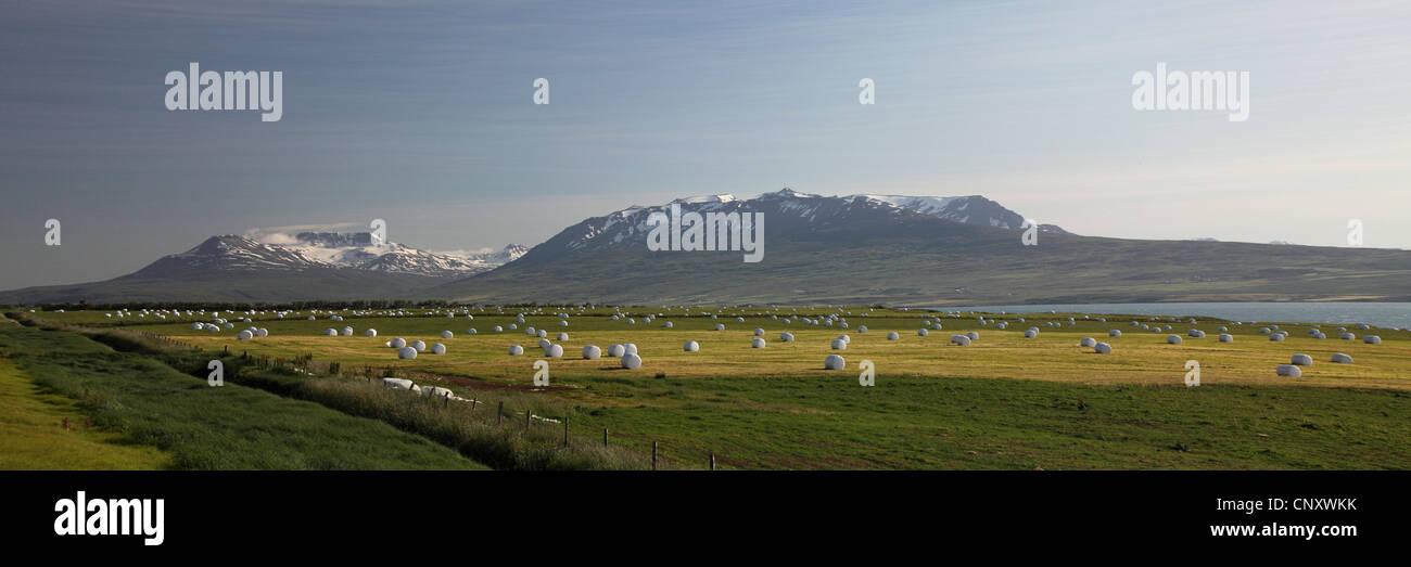 Balles d'ensilage dans les prés, l'Islande, Akureyri Photo Stock
