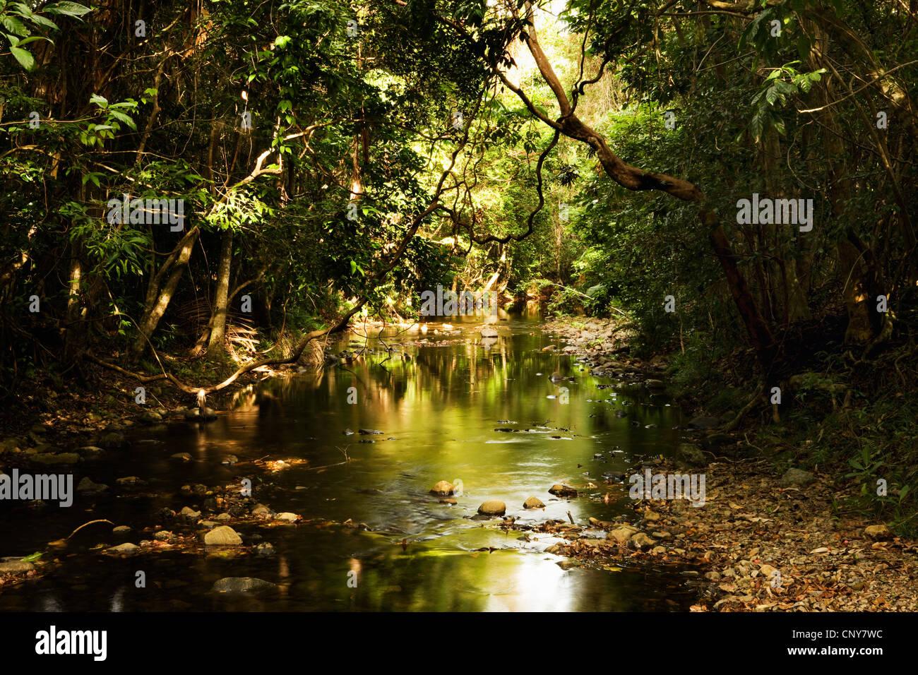 Brook à travers la forêt luxuriante, l'Australie, Queensland, parc national de Daintree Photo Stock