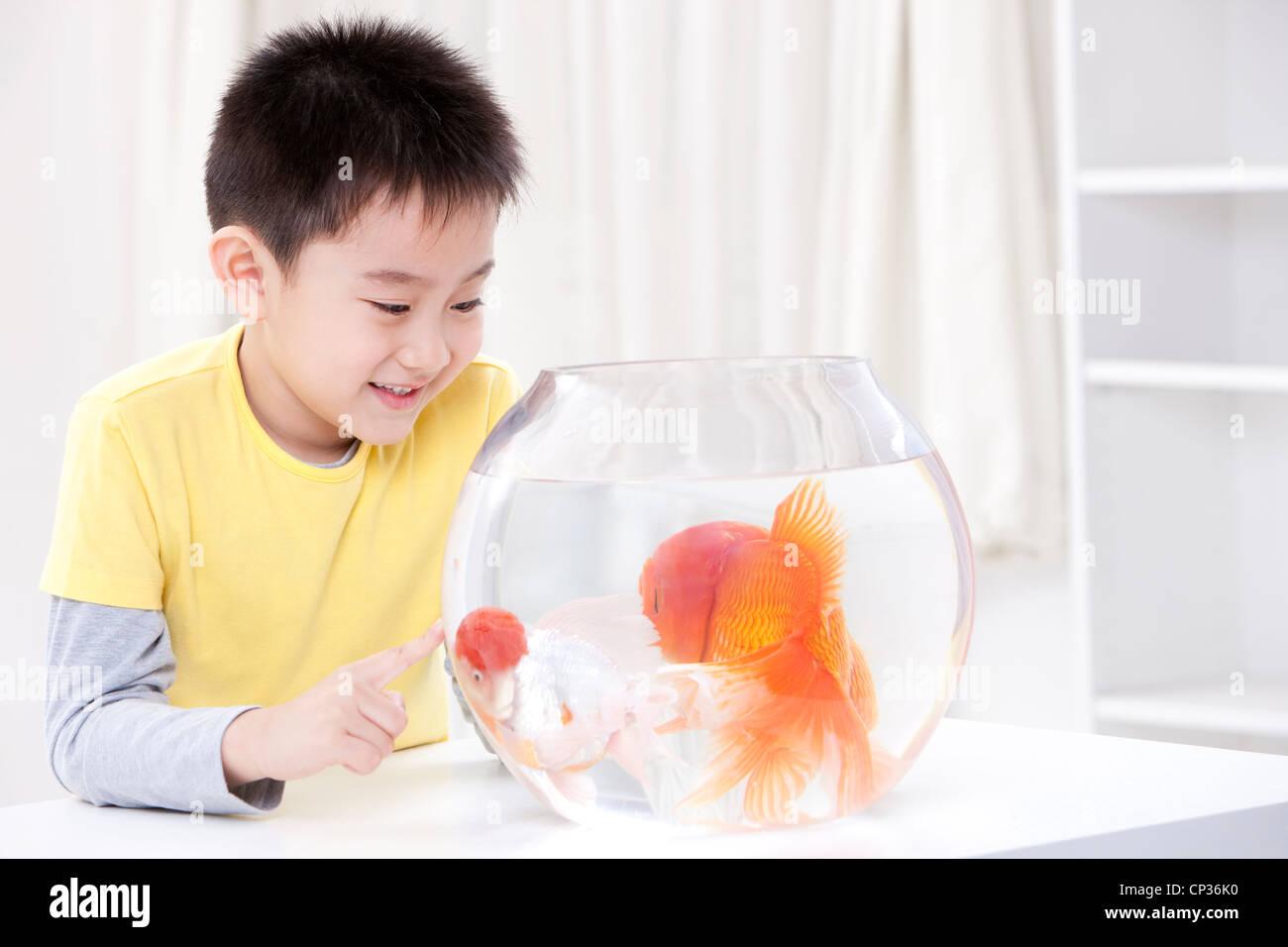 Petit garçon s'amusant avec goldfishes Photo Stock