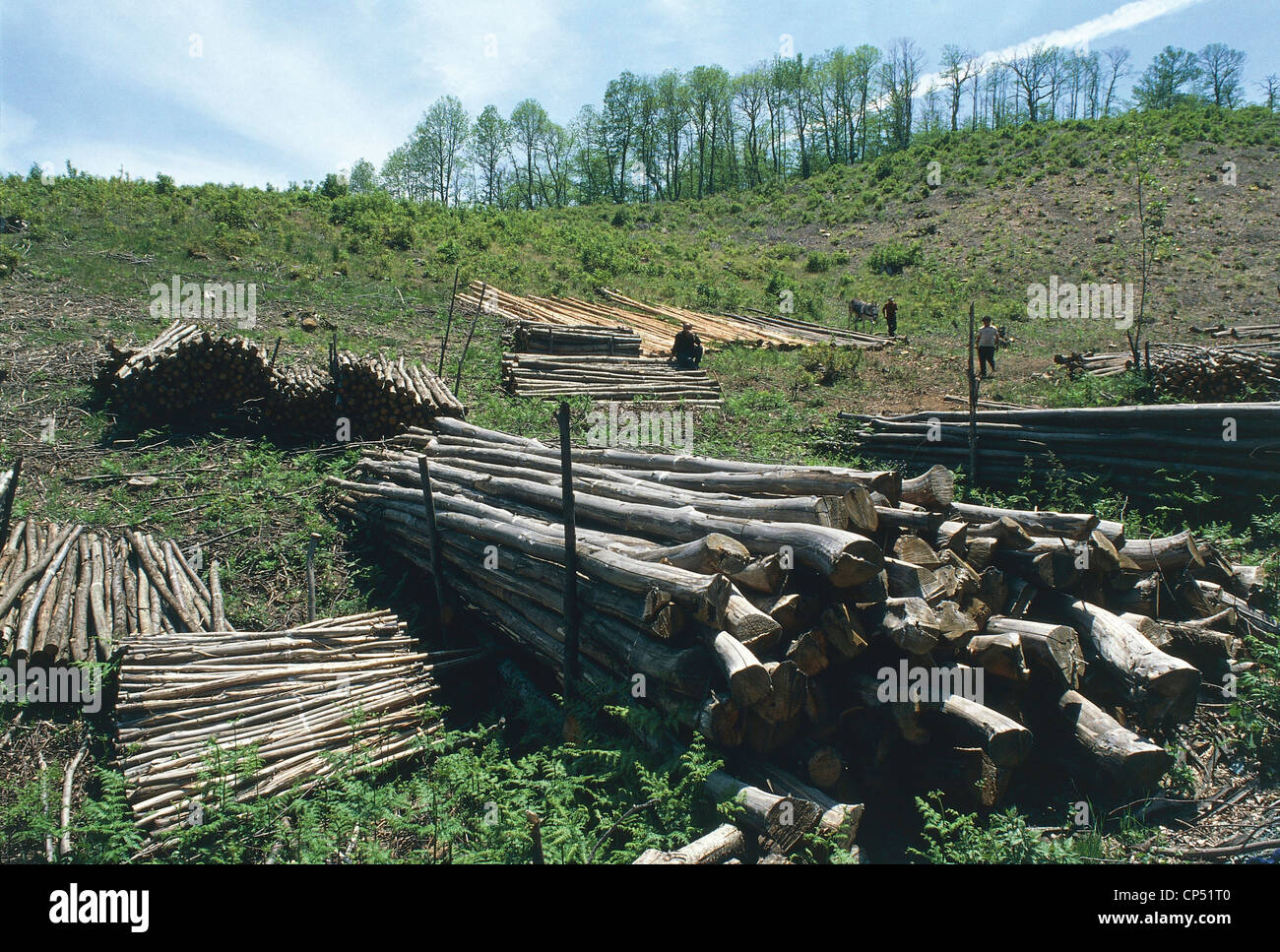 Calabre - Sila Piccola (Cz). La déforestation. Photo Stock