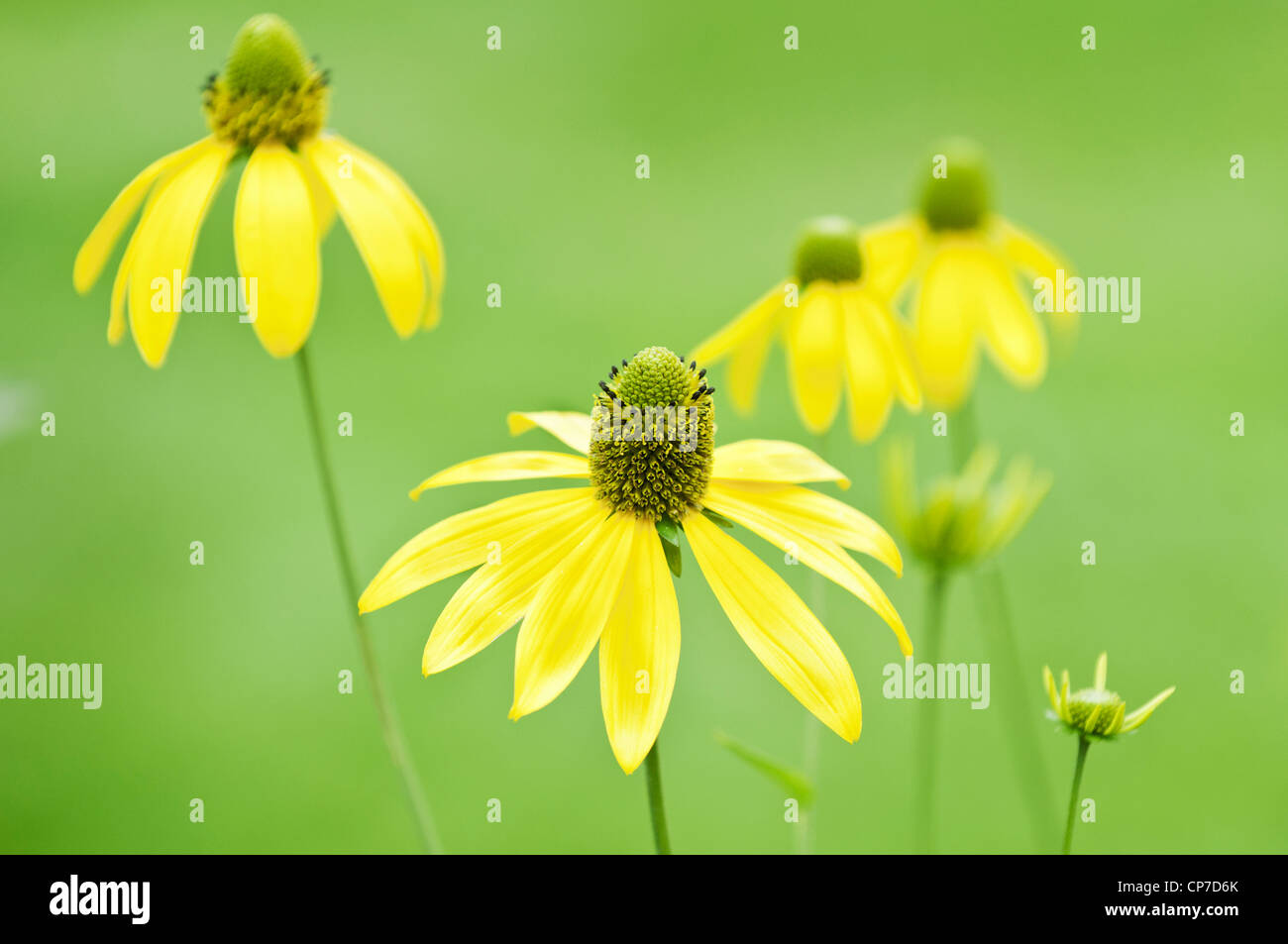 Weed photos weed images alamy - Mauvaise herbe fleur jaune ...