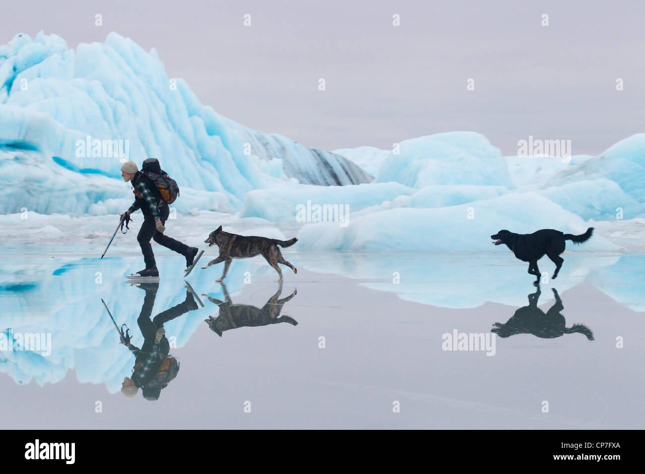 Man ice skating au Sheridan glacier avec deux chiens avec de la glace et d'icebergs dans l'arrière Photo Stock