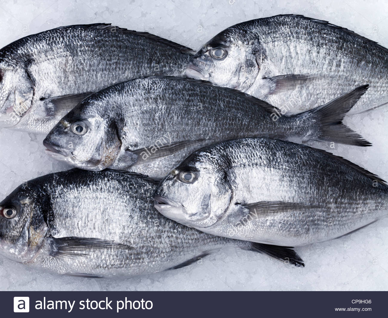 Close up,Animaux,image,couleur,refroidissement poisson mort,les poissons,le poisson sur la glace,cinq animaux,cinq Photo Stock