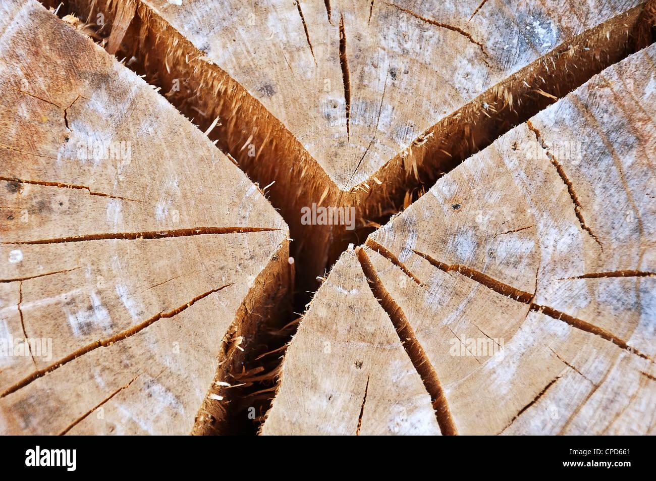Vieille souche d'arbre fissuré Photo Stock