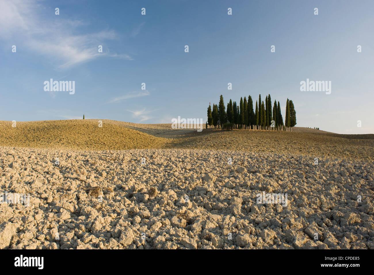 De cyprès sur une colline dans le Val d'Orcia, UNESCO World Heritage Site, Toscane, Italie, Europe Photo Stock