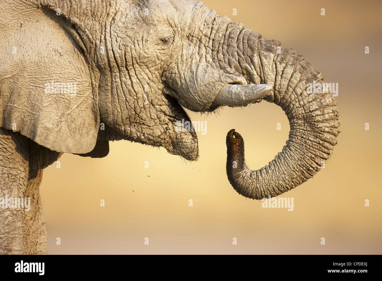 Vue rapprochée d'un éléphant boueux de l'eau potable dans le parc d'Etosha Photo Stock