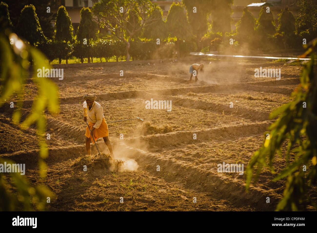 Nettoyage jardinier dans les rizières Swarg ashram, Rishikesh, Uttaranchal, Inde, Asie Banque D'Images