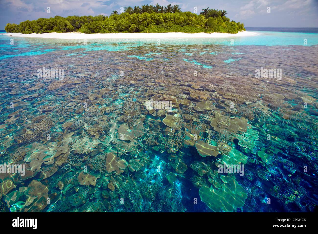 Plaques de corail, le lagon et l'île tropicale, Maldives, océan Indien, Asie Banque D'Images