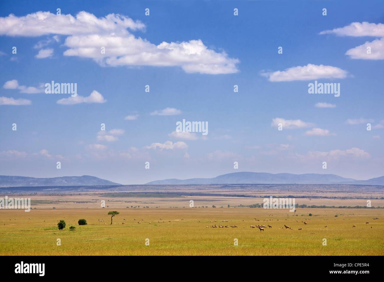 Zebra, topi et d'autres antilopes sur les plaines du Masai Mara, Kenya, Afrique de l'Est, l'Afrique Photo Stock