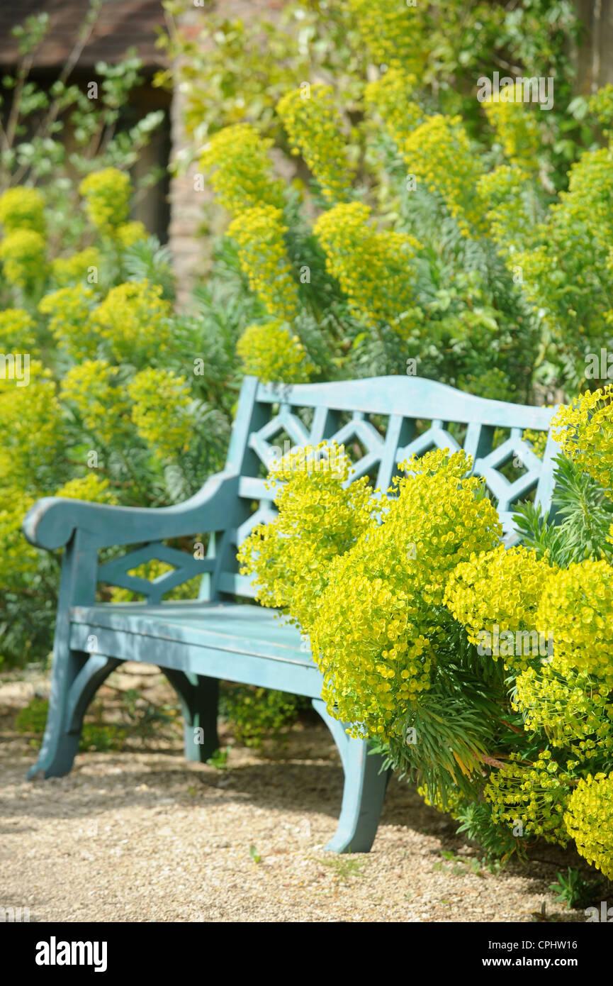 Un banc de jardin avec entouré d'Euphorbia wulfenii UK Photo Stock