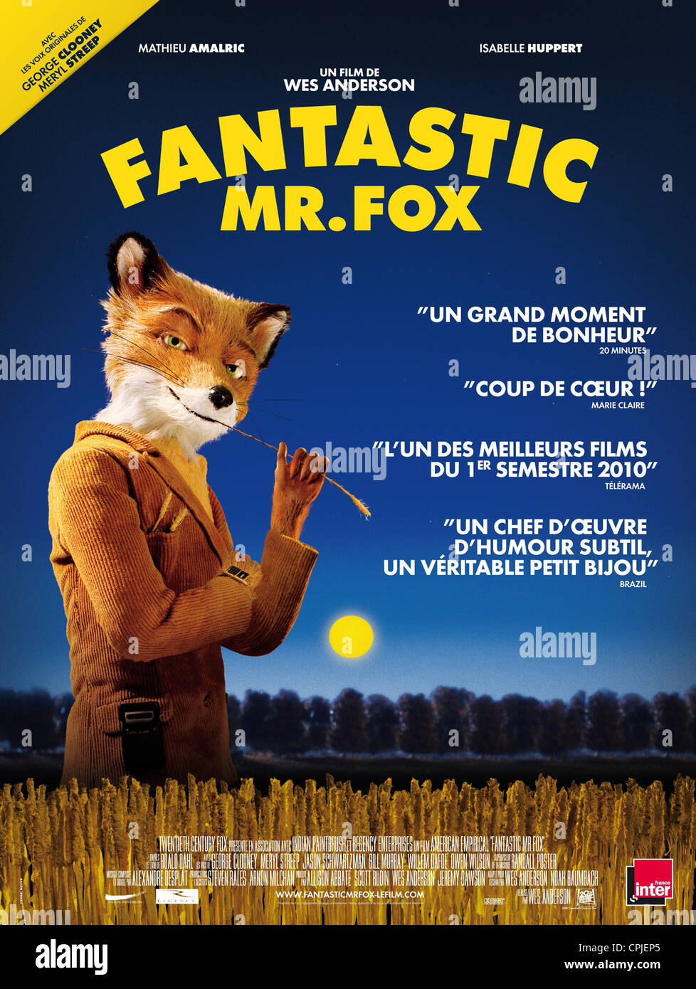 M. Fox fantastique Photo Stock