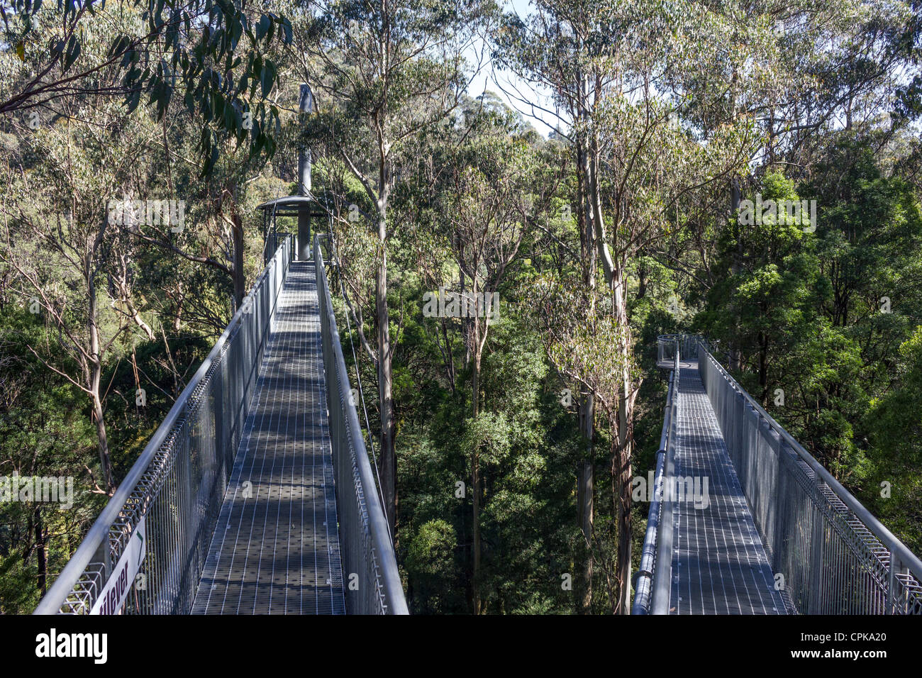 Otway Fly Treetop Walk, Great Otway National Park, Victoria, Australie Photo Stock